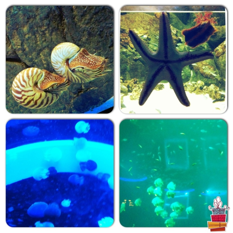 Creatures from SEA Aquarium