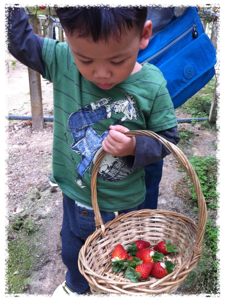 Zai Counting his harvest
