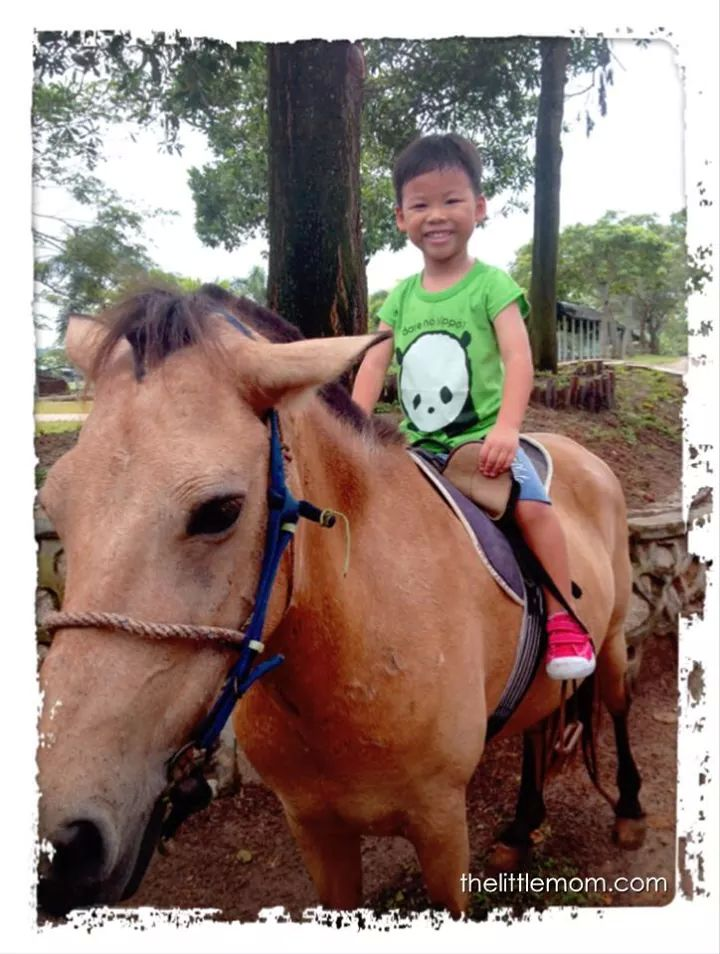 Look at the smiles on the boy face before he start his ride.  He is such an animal lover.