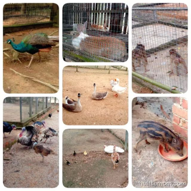 Some of the animals we saw there. Most were free ranging!